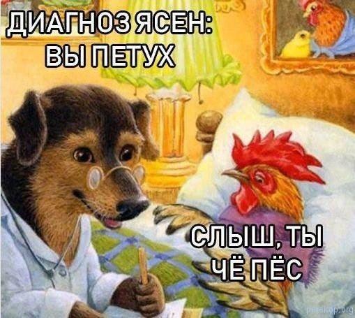 Пёс, петух, диагноз, врач