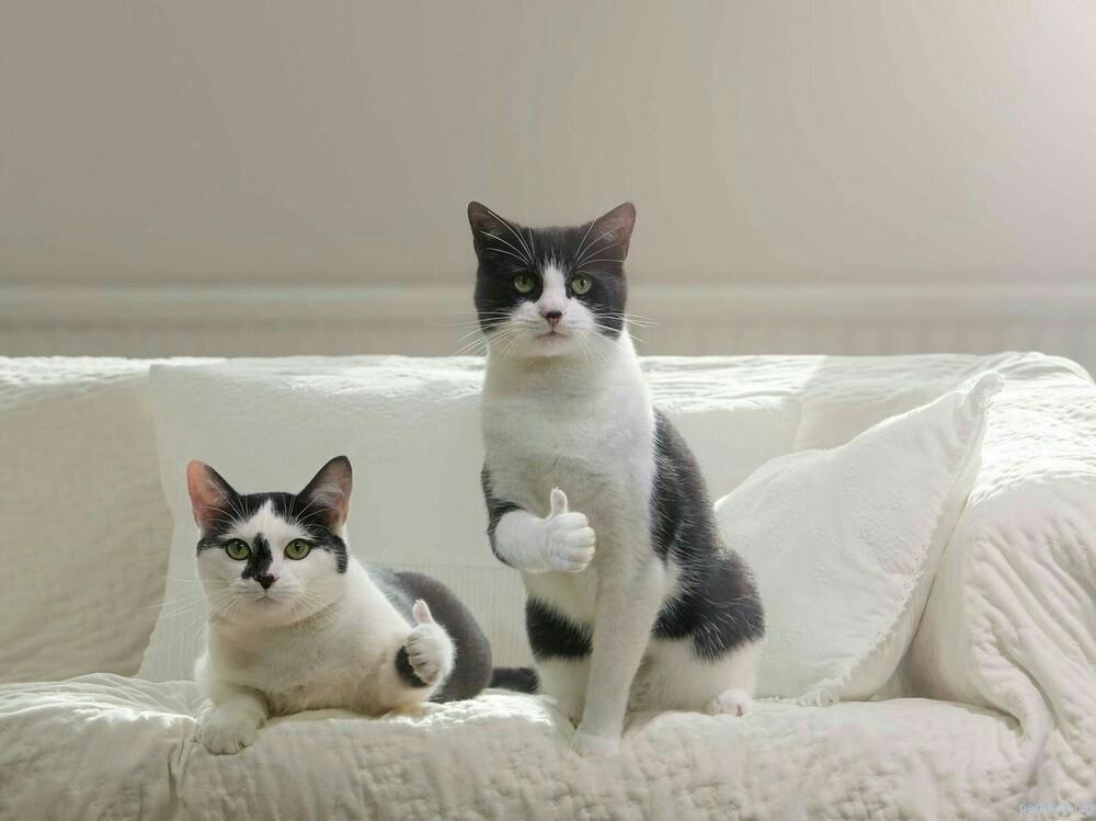 cat_like
